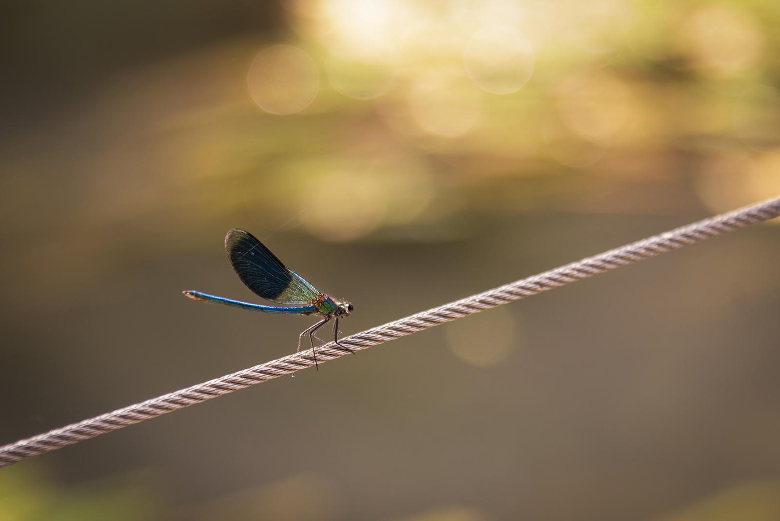 photo animalière mise en valeur de biodiversité